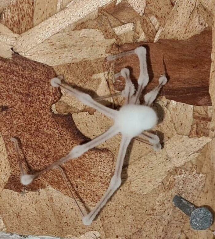 Don't Like Spiders? How About A Zombified Spider Reanimated By A Fungal Infestation?