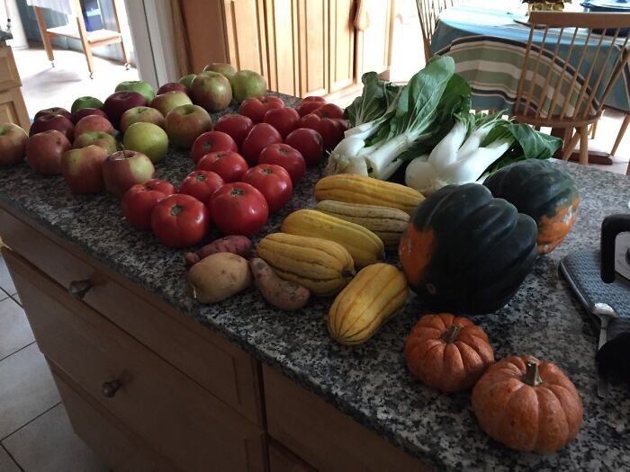 I Asked My Local Farm Stand If They Had Any Damaged Produce They Couldn't Sell. They Gave Me All Of This For Free!