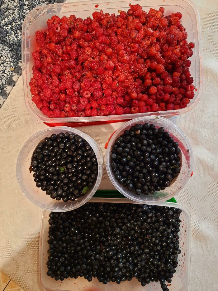 My Husband Loves Berry Jam, But Berries Are Quite Expensive This Year, So I Decided To Forage Instead Of Buying, And Picked Over 4kg. Of Them
