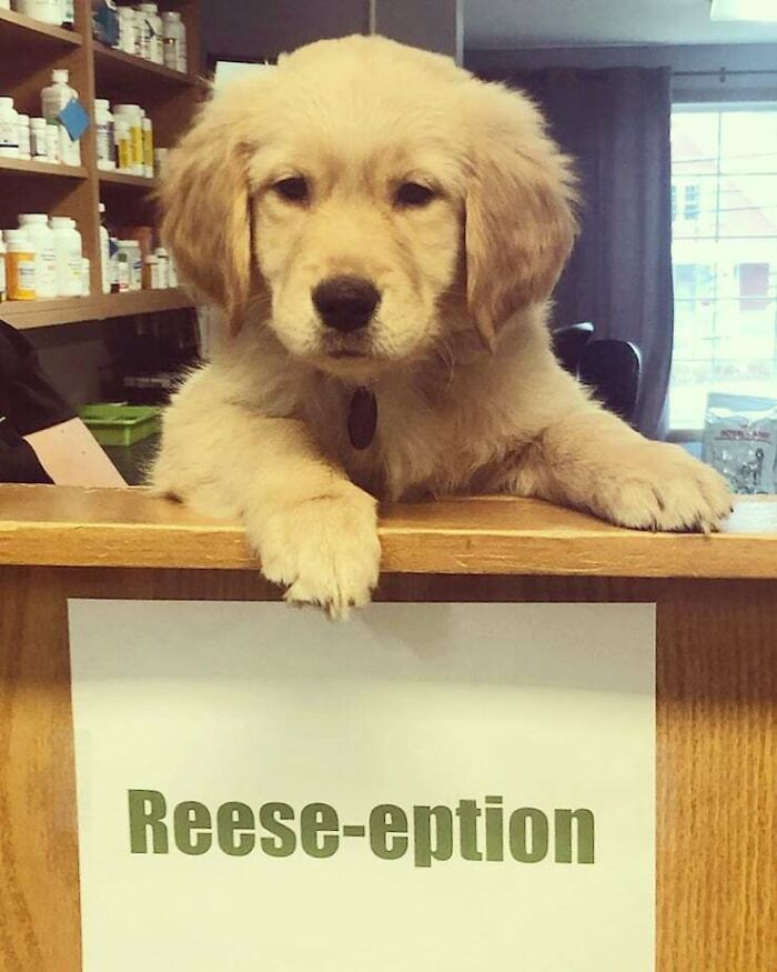 Reception Has Been Turned Into Reese-Eption Ever Since Our Doctors New Puppy Reese Came To Take Over
