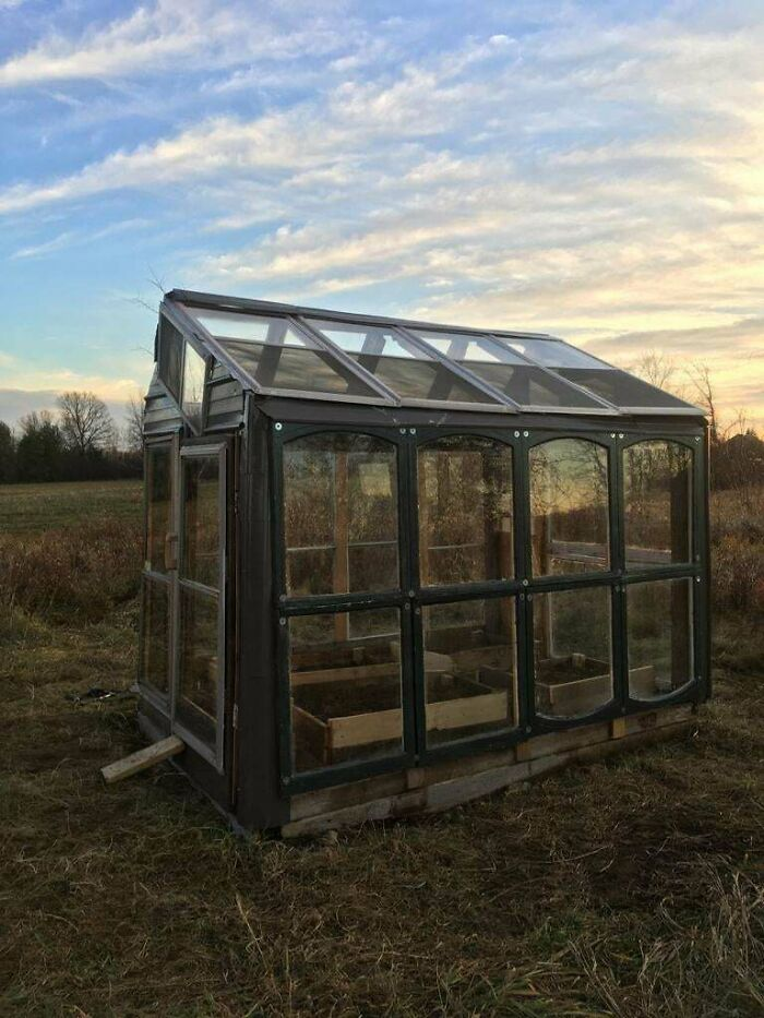 """My Dad Built A Green House Out Of Piles Of Random Stuff He's Been Saving In The """"You Never Know When It Will Come In Useful"""" Pile. Old Windows, Bits Of Flooring, Recycled Straightened Nails, And Off Cuts Of Steel Roofing. Only Had To Spend $40 On 8 Large Bolts. So Proud Of Him!"""
