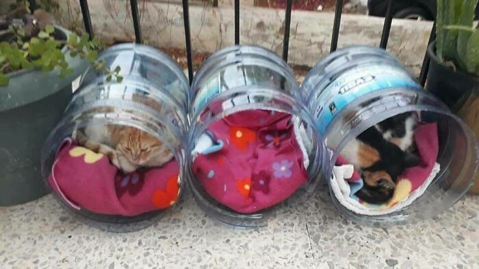 Somebody Made Homes For Street Cats To Take Shelter In Out Of Water Jugs