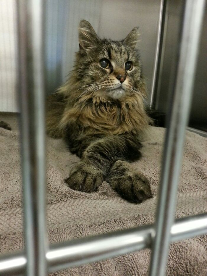 Girlfriend Is A Vet Tech, She Sends Me Photos Of Handsome Animals Like This All The Time