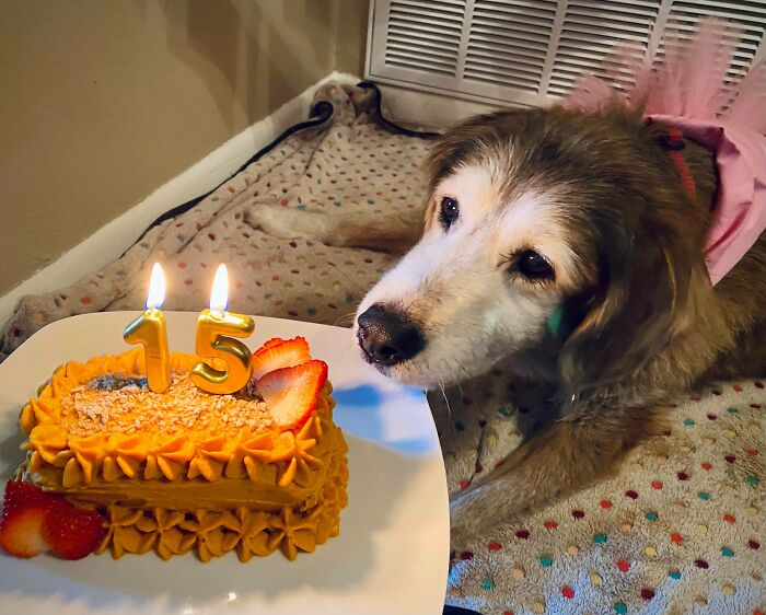 Just Look At This Sweet Old Girl Celebrating Her 15th Birthday
