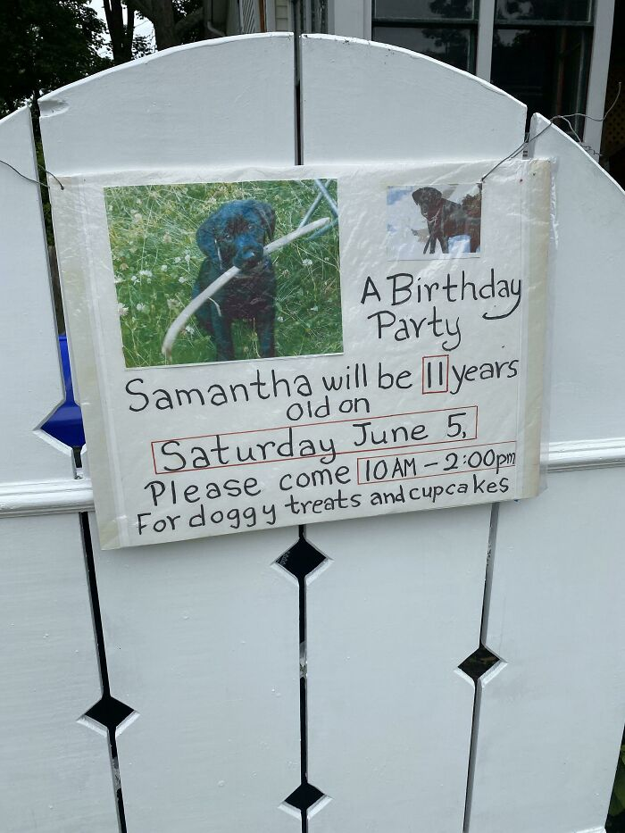 An Elderly Neighbor Of Mine Is Throwing A Birthday Party For His Dog