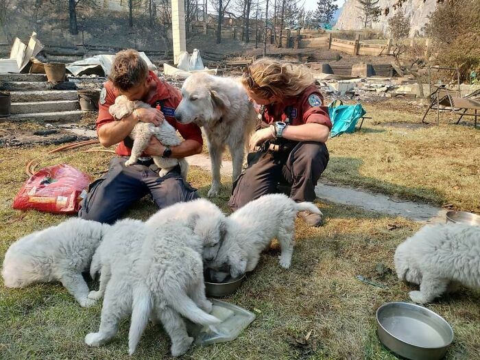 After A Wildfire Destroyed My Family's Home In Lytton, These Firefighters Saved The Animals That Were Left Behind By Bringing Them Food And Water