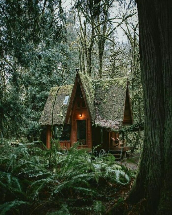 Little Witch Cabin In Enchanted Forest