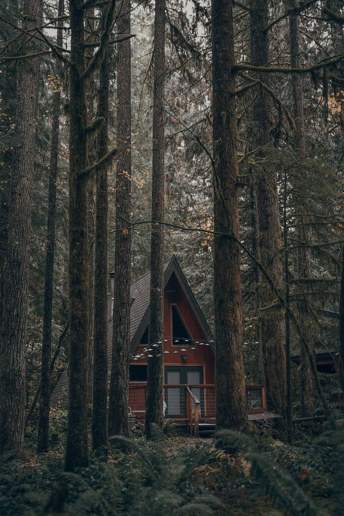 Small Cabin In The Forest, Somewhere In Canada