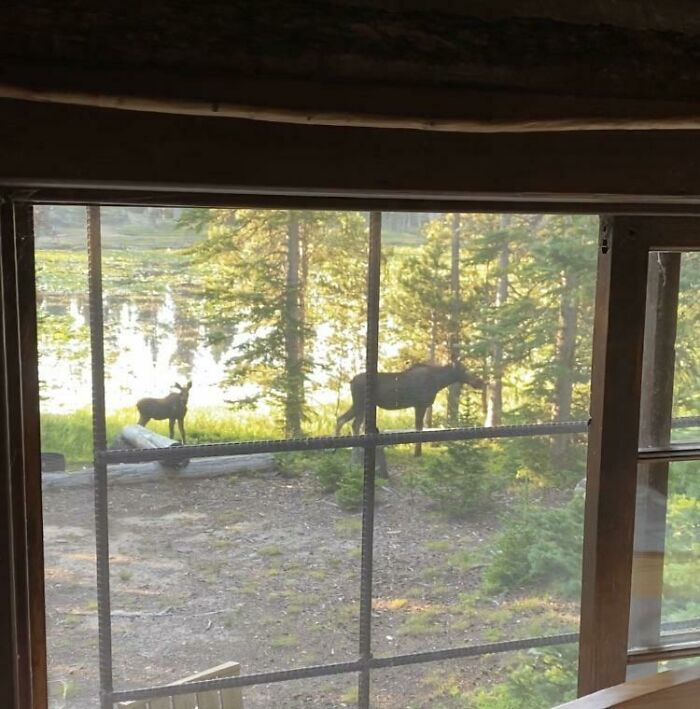 The View Out My Window At 6 Am This Morning In My Cabin Built In 1922. Life Is Good