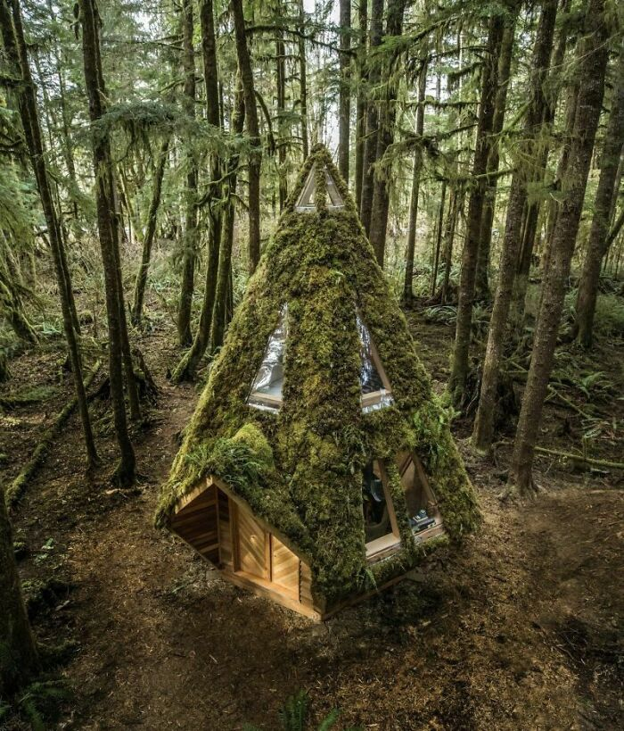 Diamond Cabin In A Pacific Northwest Rainforest - Design By Jacob Witzling And Sara Underwood