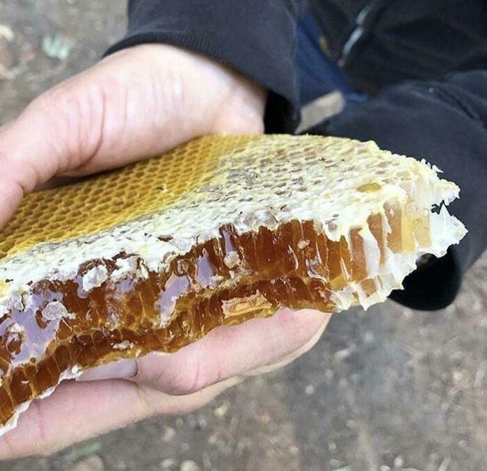 This Honeycomb