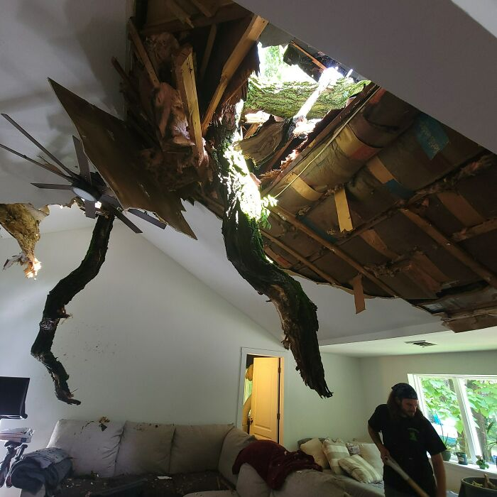Yesterday Our Neighbor's 80' Locust Tree Gave Us Some Live Edge Sky Lights, A Great View Of The Stars, And That Rainforest Cafe Atmosphere That Our Living Room Had Just Always Been Missing. No Injuries, Dogs Pissed The Bed, Life Goes On