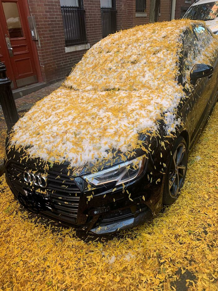 When It Snows Before The Leaves Fall Off