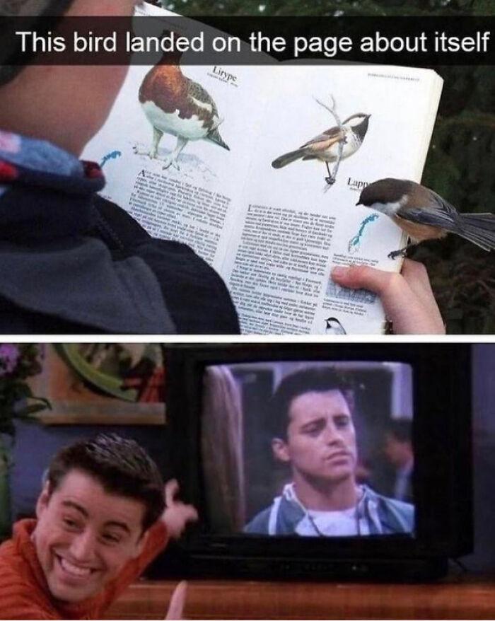Self-Aware Bird