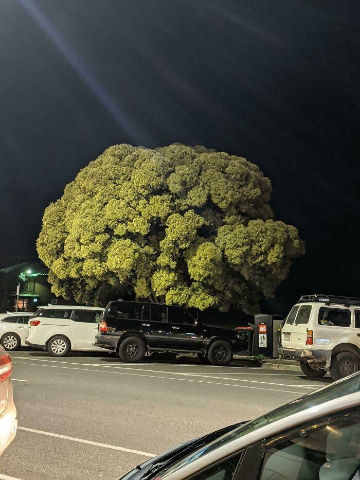 Este árbol parece un brócoli
