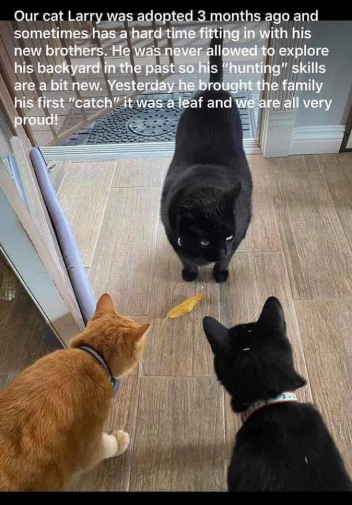 Larry Good Cat