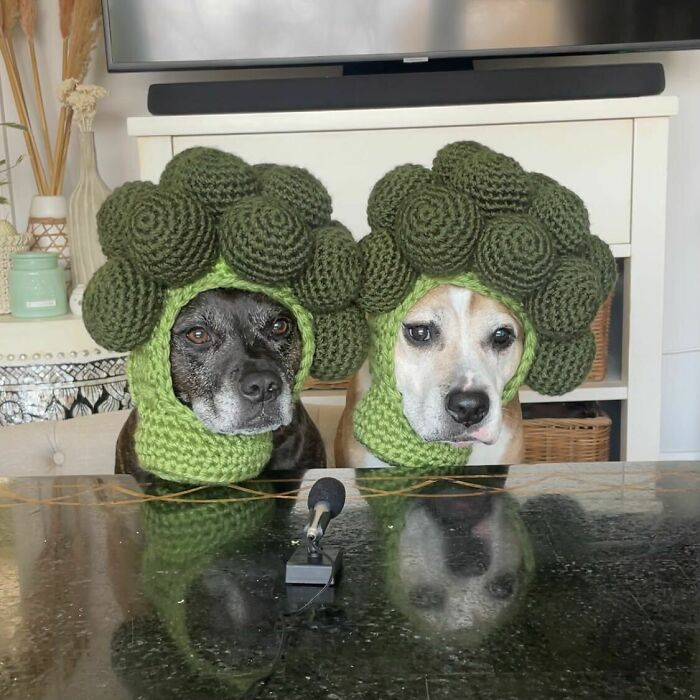 I Made My Dogs Broccoli Hats