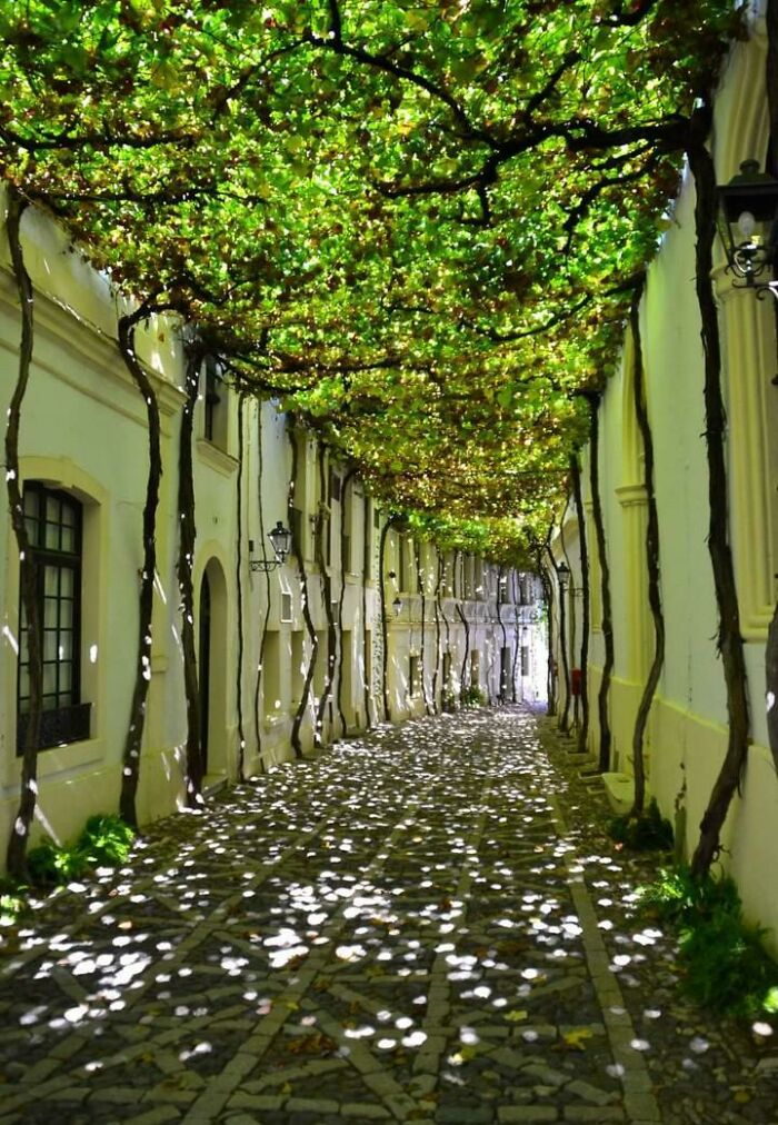 Harnessing Nature To Shade A Walkway
