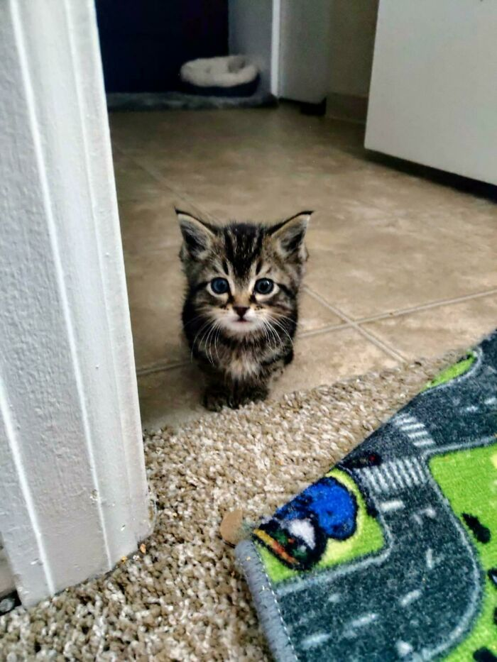 Baby Boy We Found And Rescued Outside!