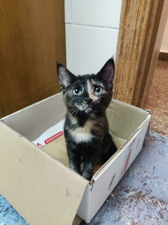 I'm A Foster Home For Orphaned Kittens. I've Raised 12 Kittens And Gave Them Up For Adoption. This Is My First Foster Fail. Welcome Home, Midna