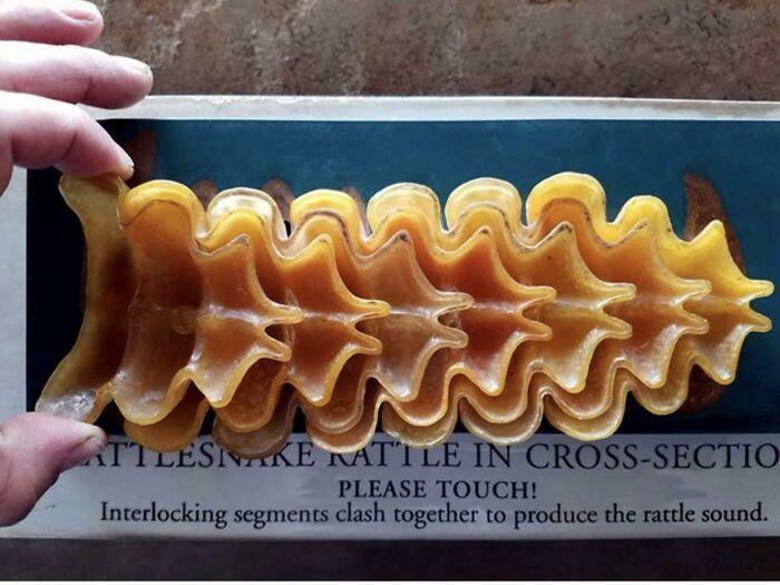 Pasta prohibida (cascabel de una serpiente de cascabel)
