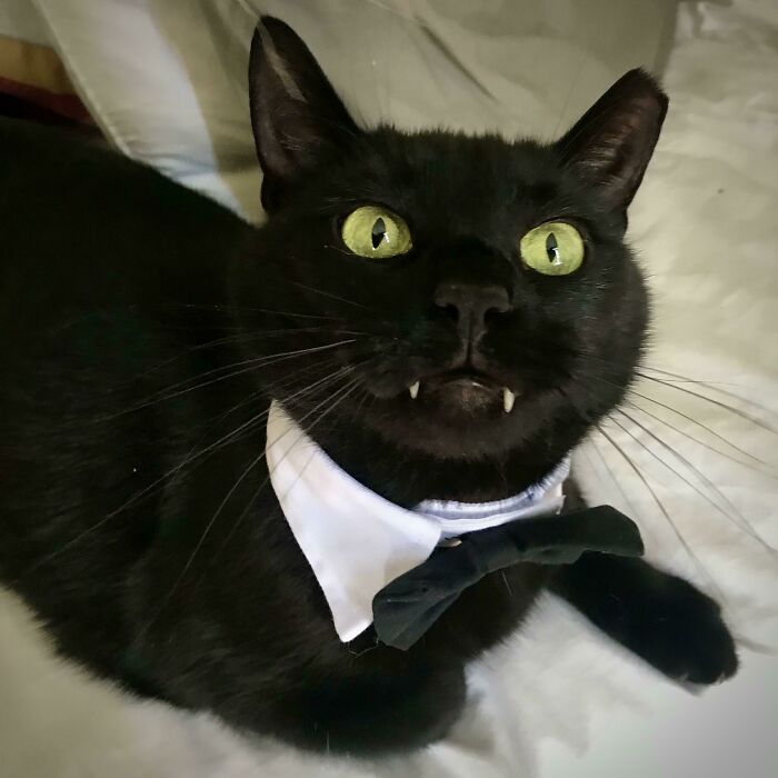 I Just Adopted This Perpetually Snaggletoothed Void. Meet Mr. Claudius Maximus Depussy