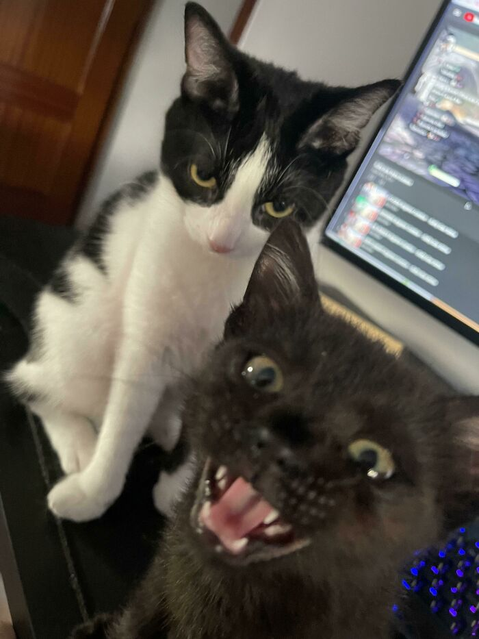 Someone Likes Being Adopted And Someone Is Not Amused By Her New Brother
