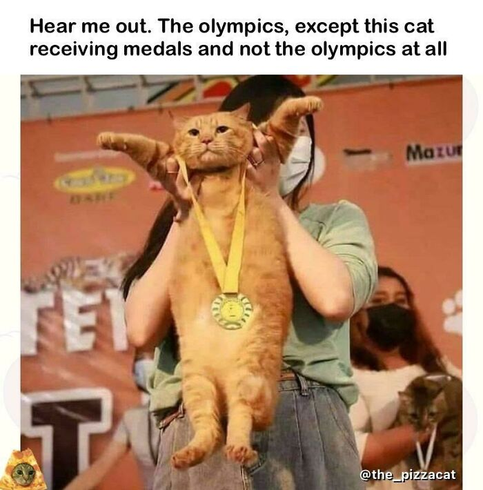 Cat Olympics? This Mfer Spittin Tho