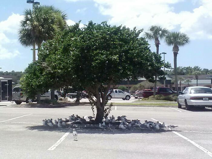 You Know It's Hot In Florida When
