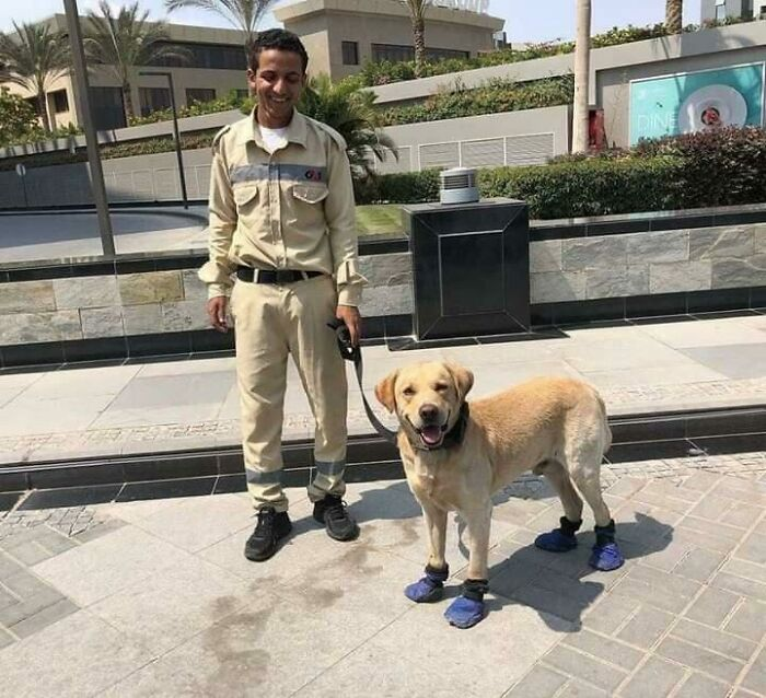 A Security Man In Egypt Decided To Cover The Dog's Paws To Protect Him From The Hot Pavement