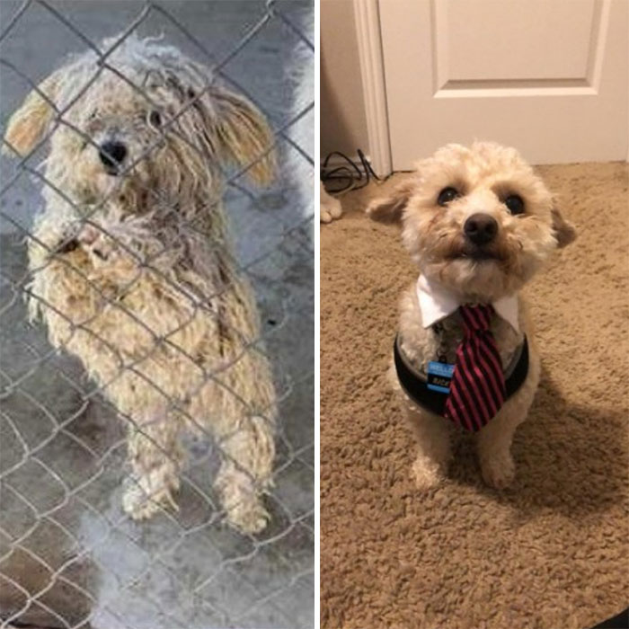 My Brother's Dog, Ricky, Before And After Adoption