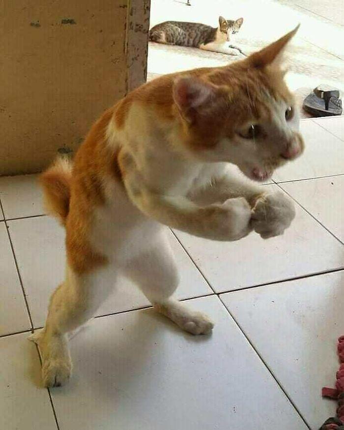 Funny-Broken-Cats-Pics