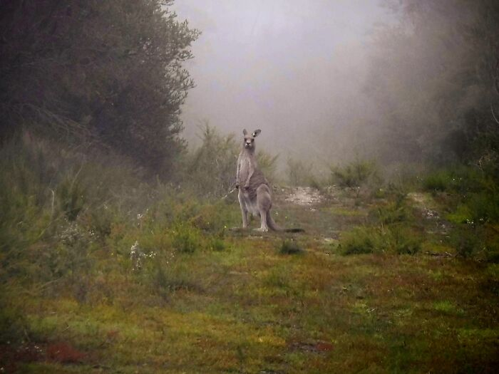 Lil Grey Roo In Heavy Mist Touched Up A Little