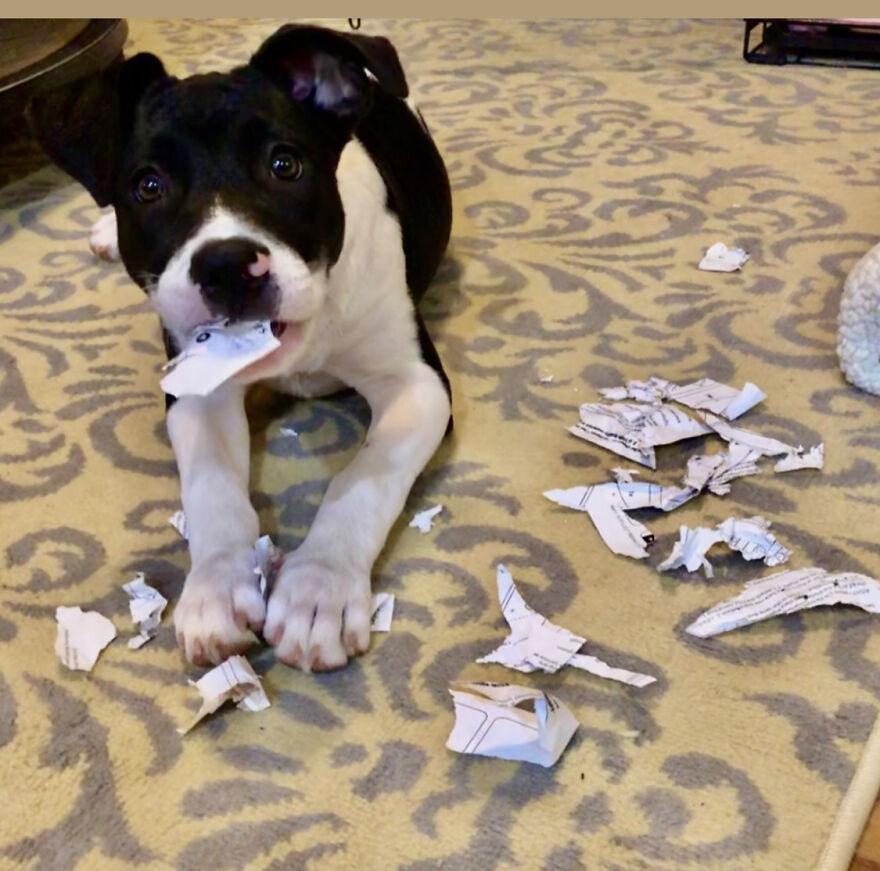 """The Dog Ate My Homework!"""