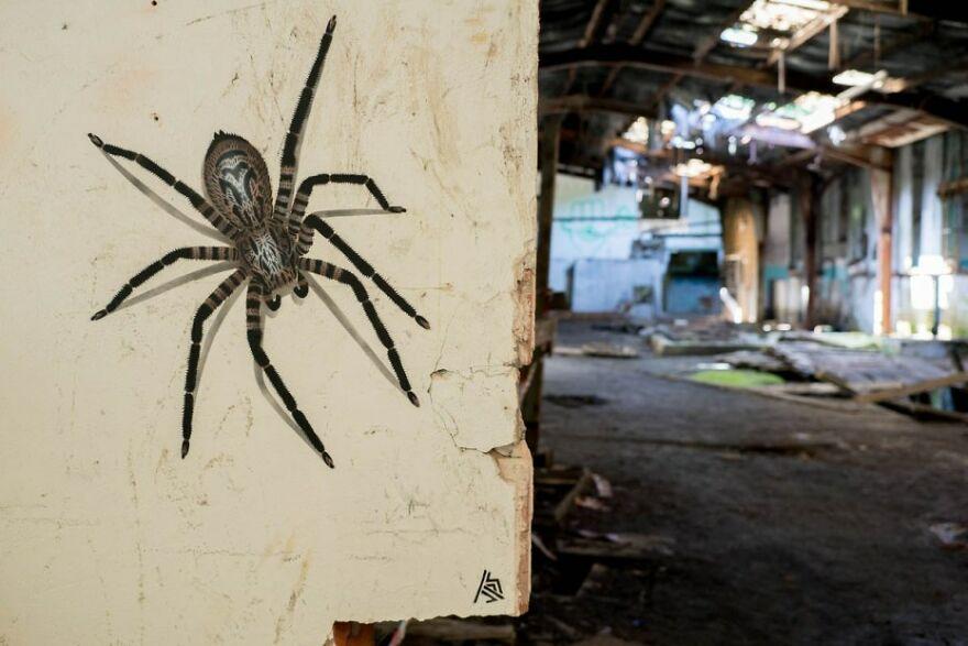 Spider, By JPS