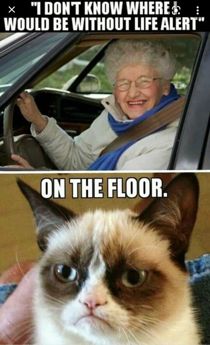 Love Cats. Thanks Op On 9gag