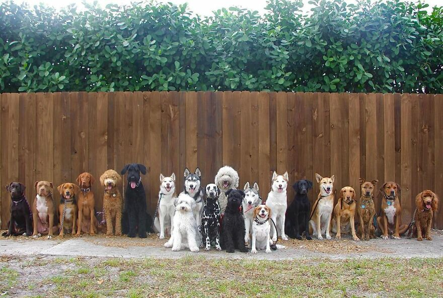 This Nursery Is Getting Their Dogs To Pose Perfectly For The Photos