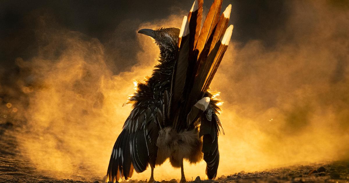 11 Winners Of The 2021 Audubon Wildlife Bird Photography Awards
