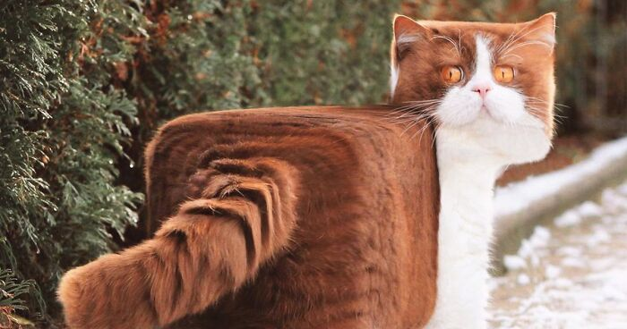 Artist Changes Animals To Be Shaped Like Cubes (24 New Pics)