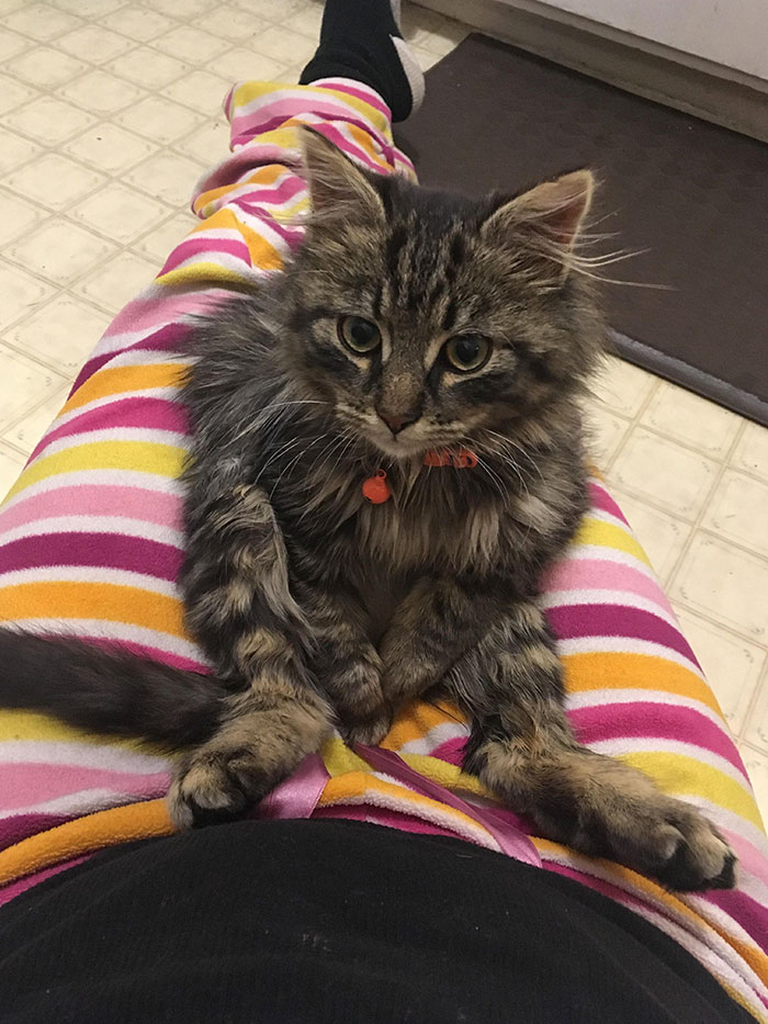 I Work At A Vet Clinic And Haven't Had A Pet In Quite Some Time. Someone Brought This Fella In To Be Neutered And Stated She'd Be Returning Him Back Outside
