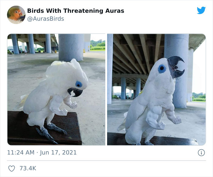 Lol Birds Are Awesome