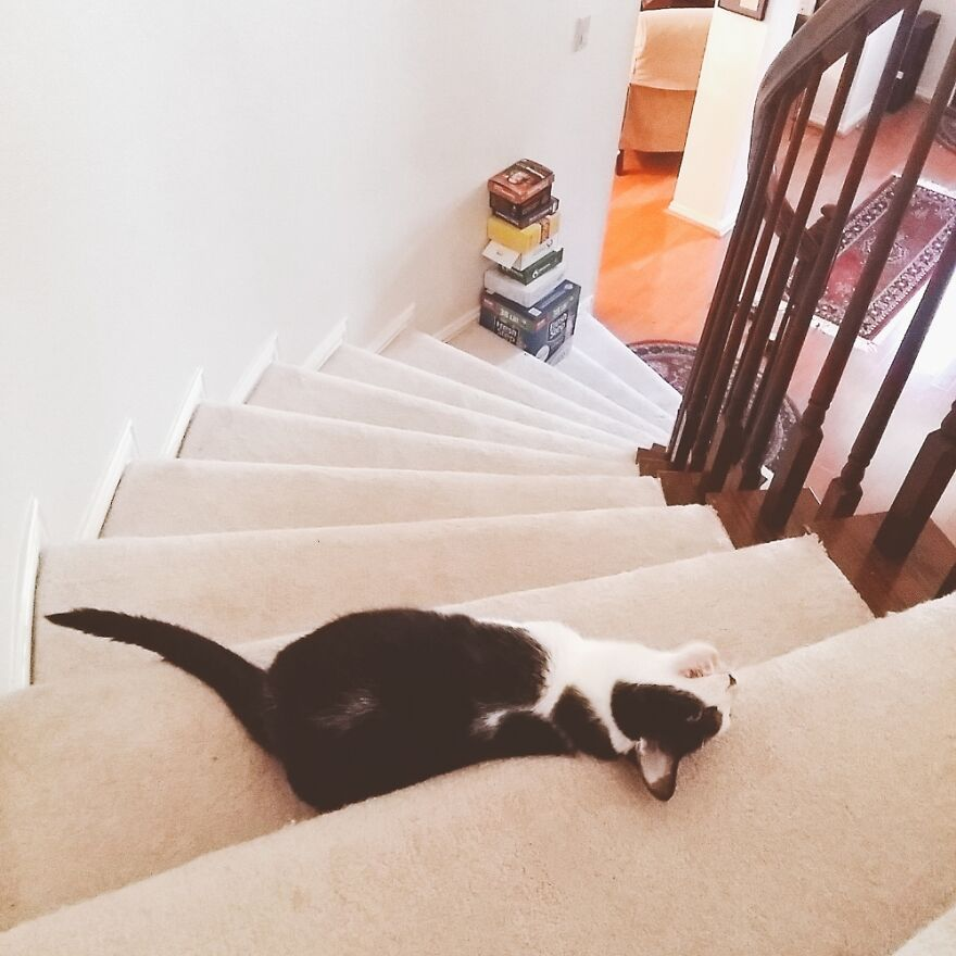 My Bonnie Lies Over The Staircase 🎶
