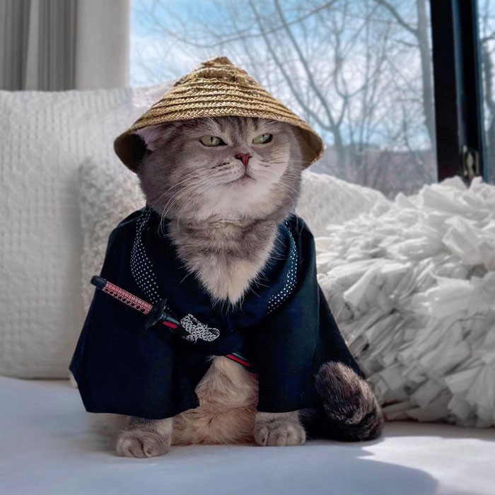 Abandoned Cat Finds A New Home And Becomes An Instagram Sensation With Its Cute Outfits (30 Pics)
