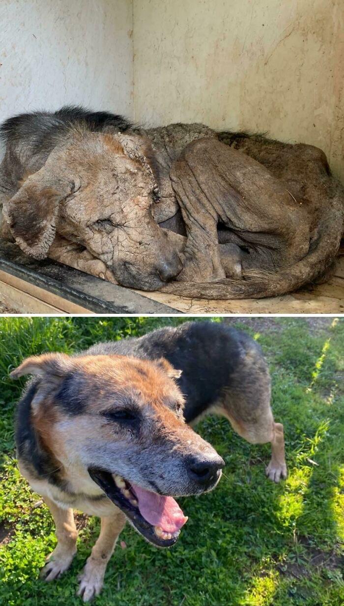 Magnum fue rescatado por un refugio local donde vivo. Gracias a todos los que trabajan incansablemente para salvar la vida de estos ángeles