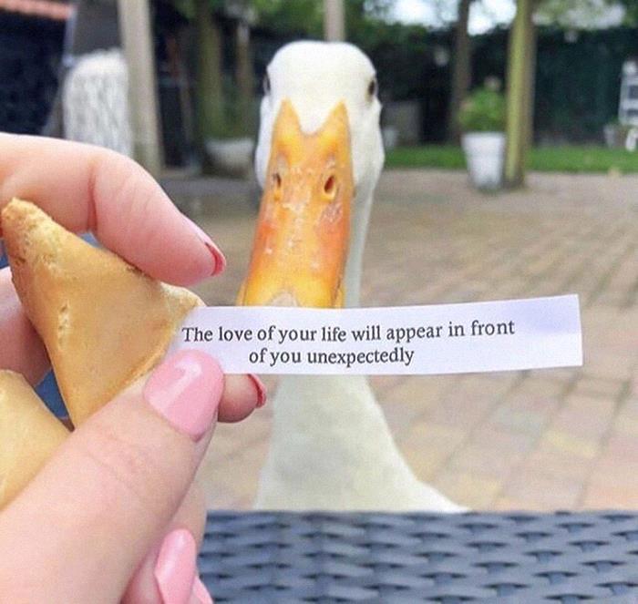 Funny-Bird-Jokes