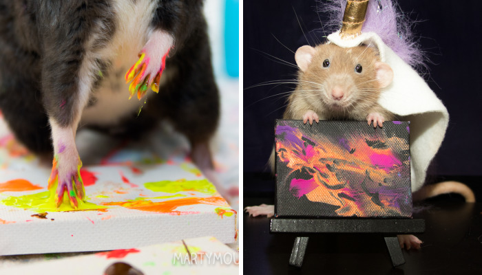 My Rats Make Art And Spread Happiness In Their Paintings