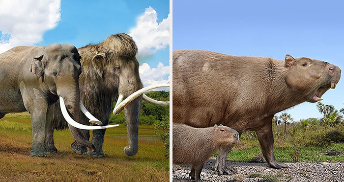 37 Comparisons Of The Sizes Of Prehistoric Animal Ancestors And Their Modern Relatives By Roman Uchytel