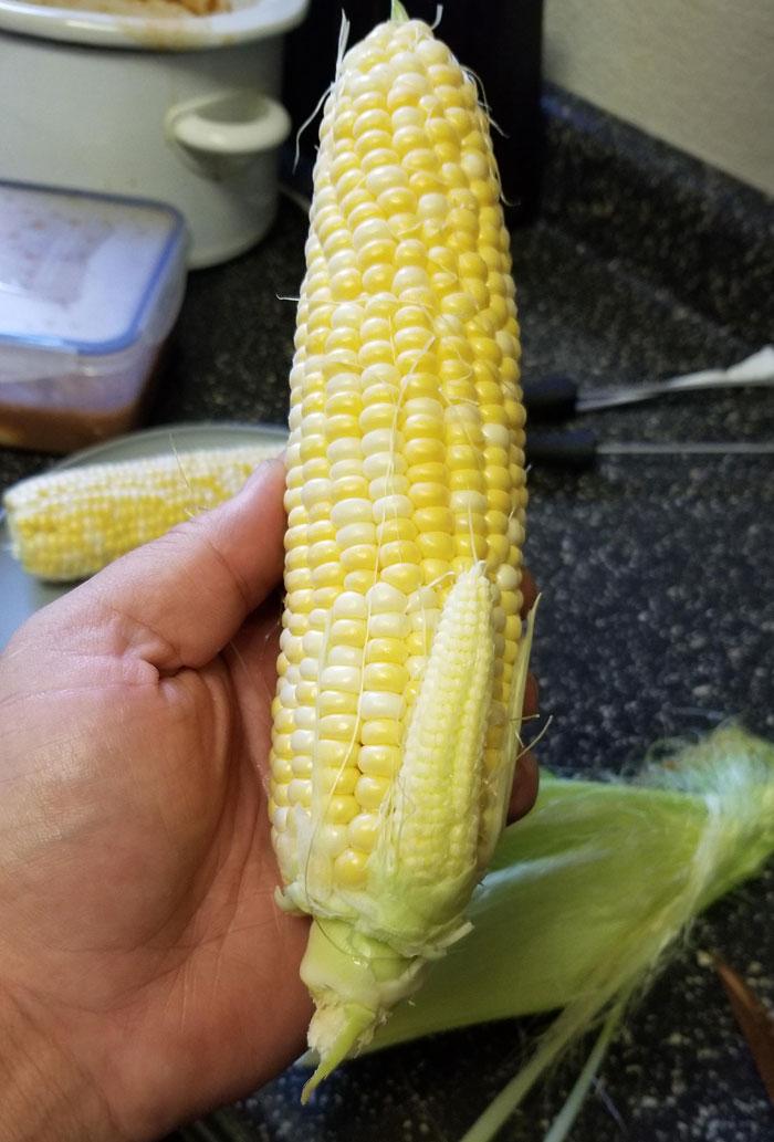 A mi maíz le brotó un bebé dentro de la cáscara