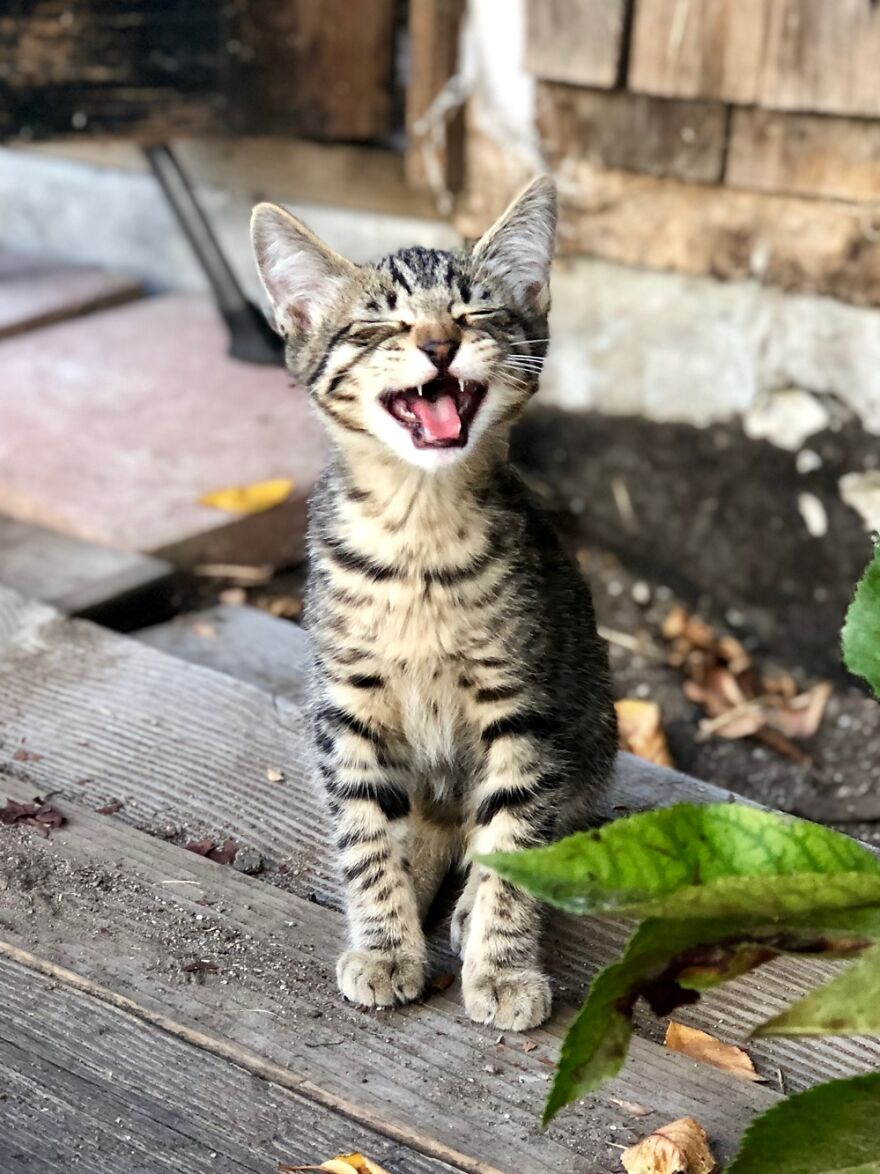 My Kitten Winston Singing His First Time Outside 🎶