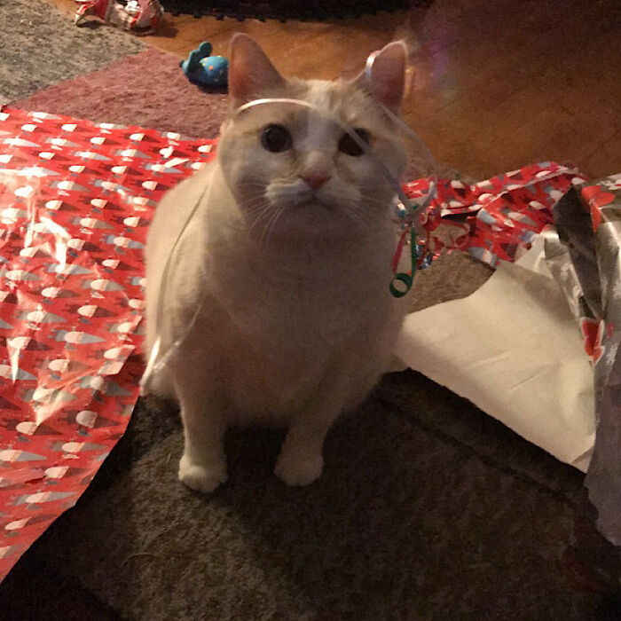 Oliver Loves Christmas